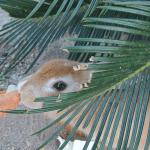 大久野島でうさぎと触れ合いました~秋季レク~